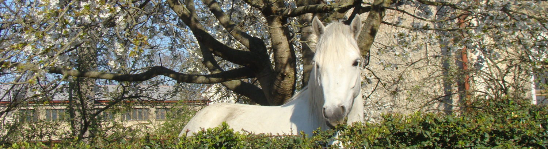 Česká Asociace Connemara Pony